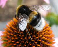 Build a buzz