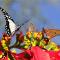 social butterfly