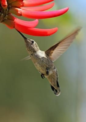 Hummingbird: A wake-up call for better content marketing