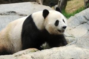 Will Google's Panda 4.0 bite into your traffic?