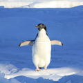 The real-time Penguin algorithm is finally here!